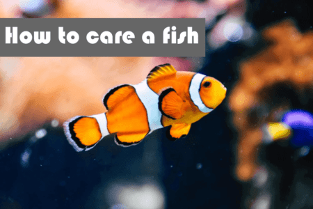 How to take care of a fish? Read before buying a fish