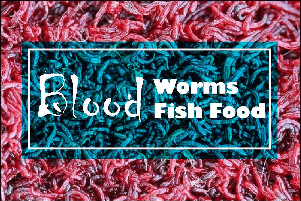 bloodworms fish food
