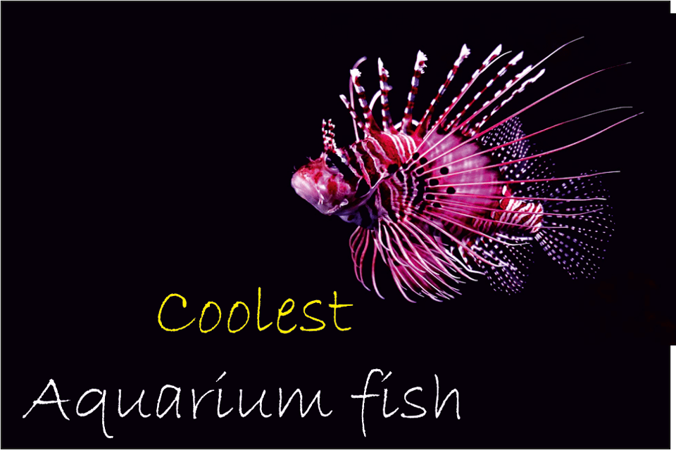 coolest freshwater aquarium fish
