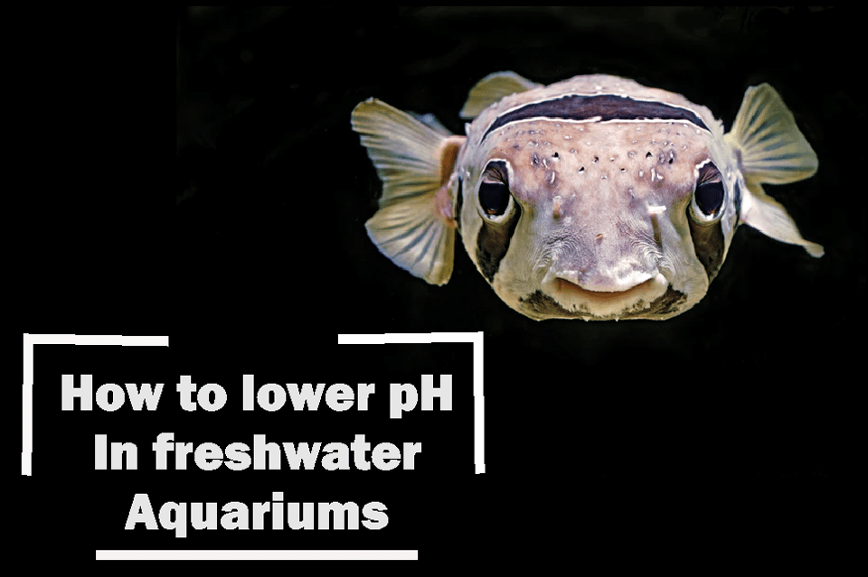 how to lower ph in aquarium