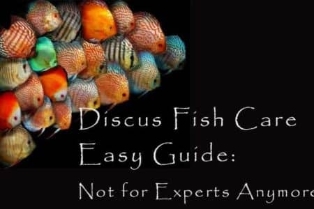 Discus Fish Care Easy Guide: Not for Experts Anymore