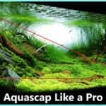 Aquascaping guide
