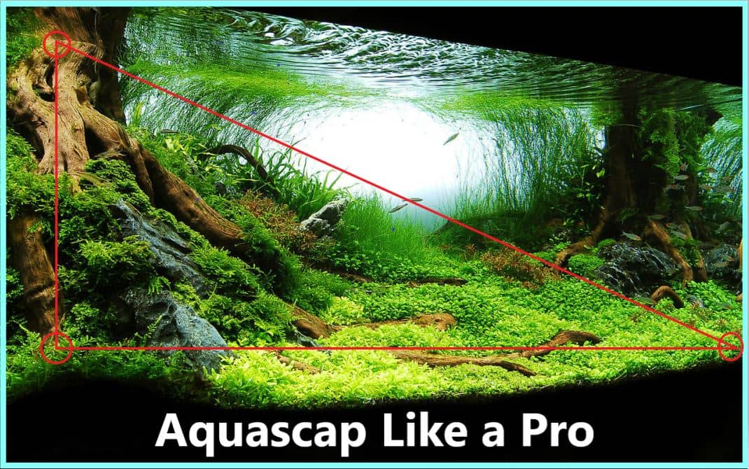 Aquascaping Advanced Guide Learn Professional Aquascaping Life Of Fish