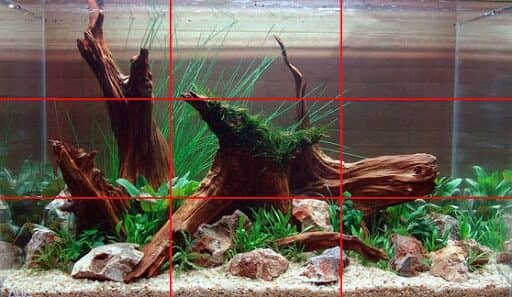 avoid symmetry in aquascaping