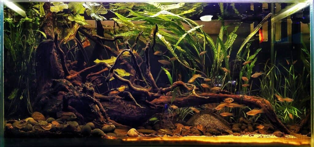 Biotope Style aquascaping