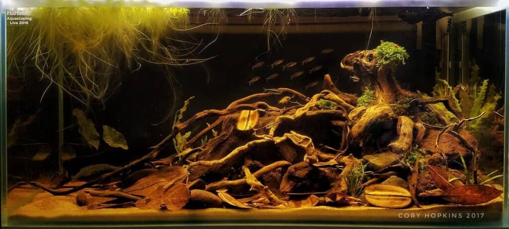 Black Water Style aquascaping