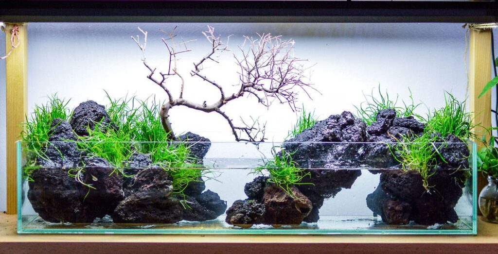 Paludariums Style aquascaping