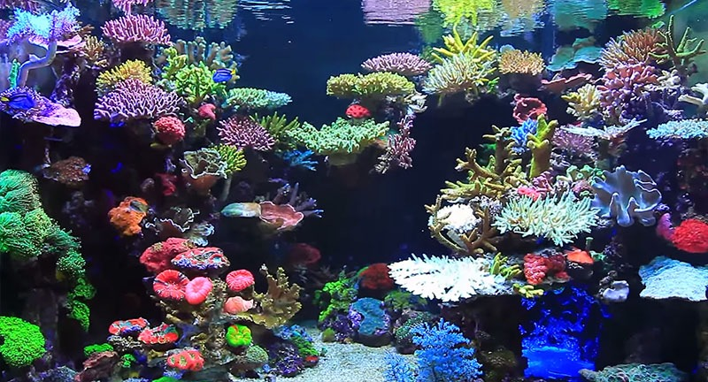 Reef Style aquascaping
