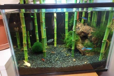 Put Lucky Bamboo In Aquarium? Is Bamboo Safe For Fish?