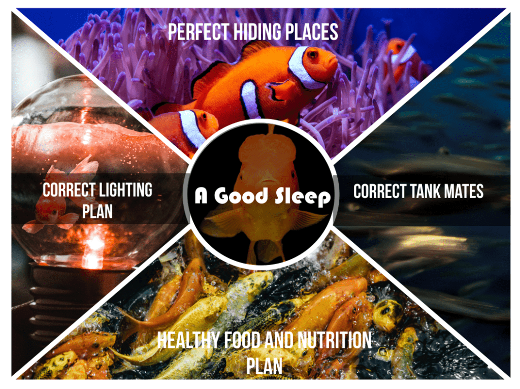 How Do I Make Sure My Fish Get Enough Sleep?