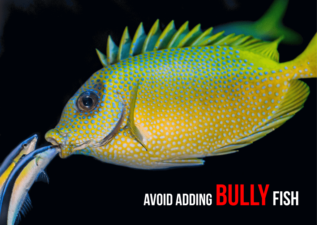 Bullying affects sleeping in fish