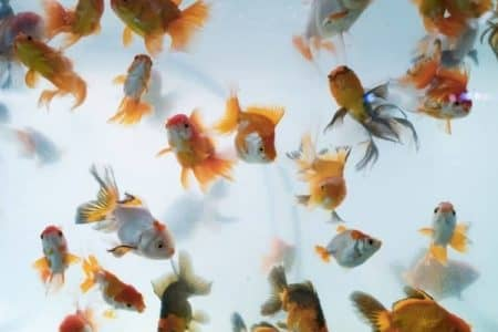 6 Reasons Why Fish Tank Smells Bad And Is Cloudy? How To Stop