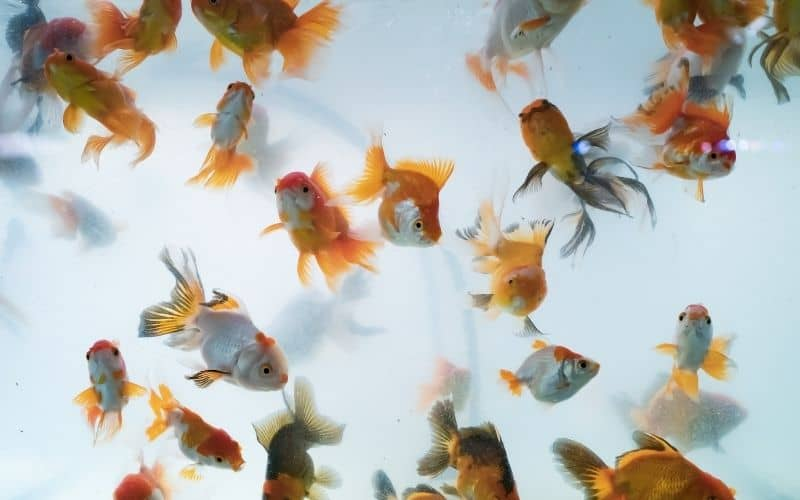 6 Reasons Why Fish Tank Smells Bad And Is Cloudy How To Stop