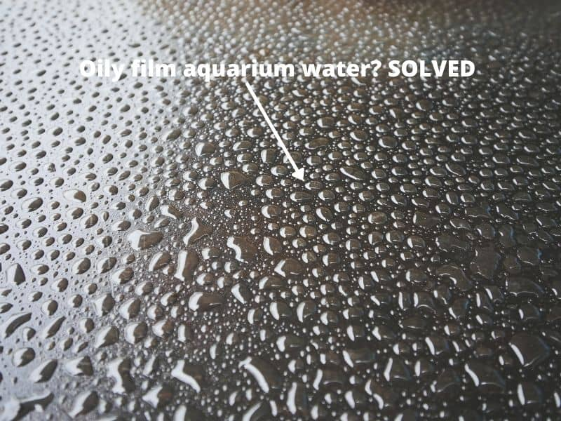 What causes oily film aquarium water