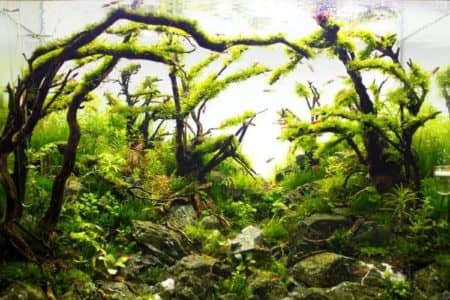 How To Create A Forest Aquascape? 3 Simple Steps