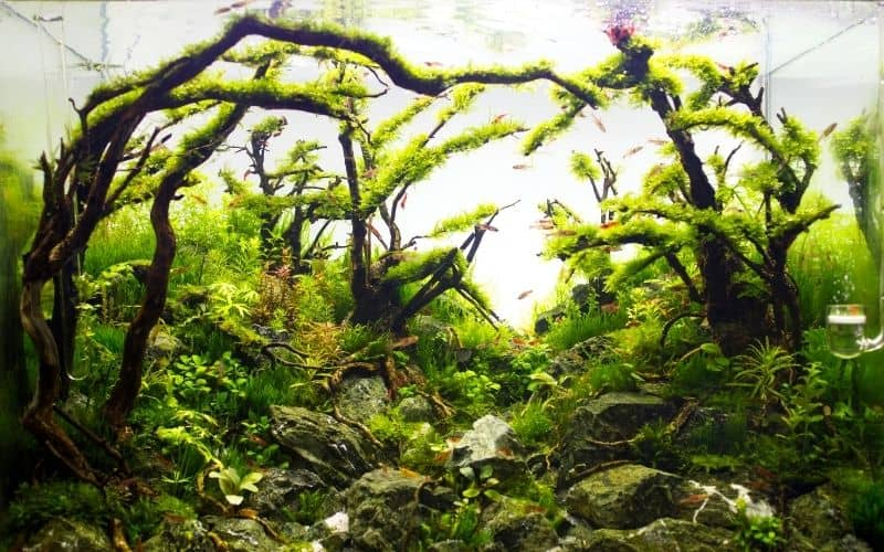 How To Create A Forest Aquascape 3 Simple Steps