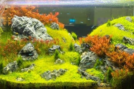 How long do aquascapes last? 10 things for look out