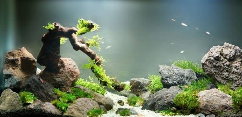 How long do aquascapes last 10 things for