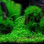 How to get lush green aquarium plants 5 points