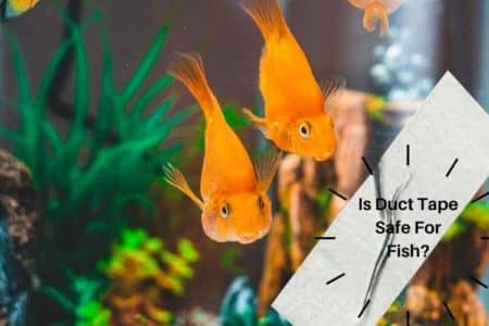 Is Duct Tape Safe For Fish? Know Aquarium Safe Tapes
