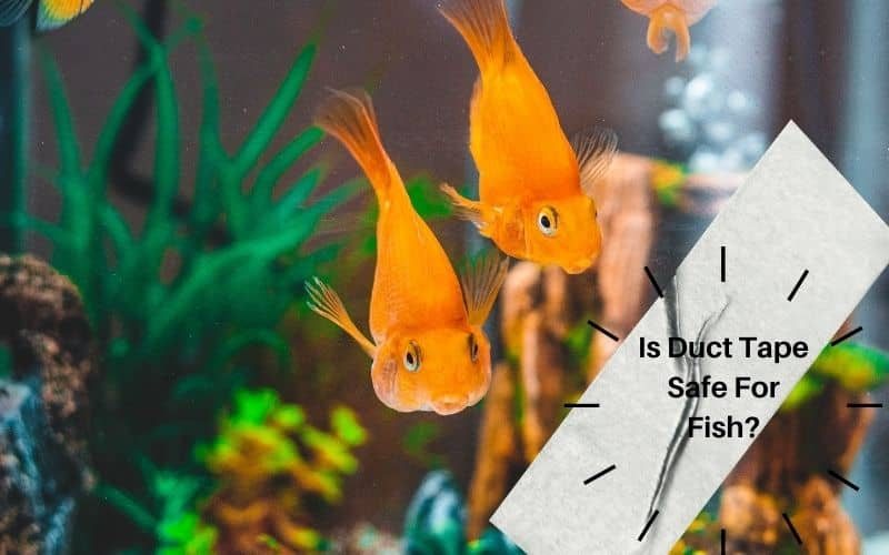 Is Duct Tape Safe For Fish Know Aquarium Safe Tapes