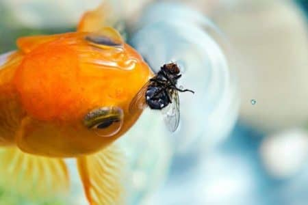 What Can Goldfish Eat? 32 Foods Goldfish Likes to Eat and Nutrition