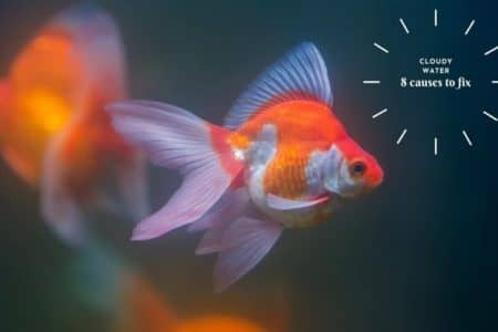 Why The Goldfish Tank Appears Cloudy? 8 Causes To Fix