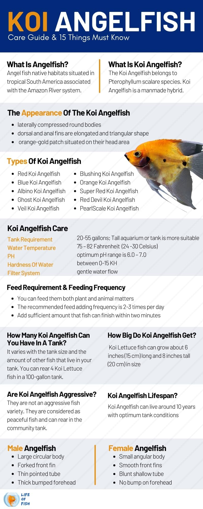 Koi Angelfish Care Guide & 15 Things Must Know infographic