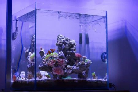 7 Best Nano Tanks For The New Fish Keeper | Comparison
