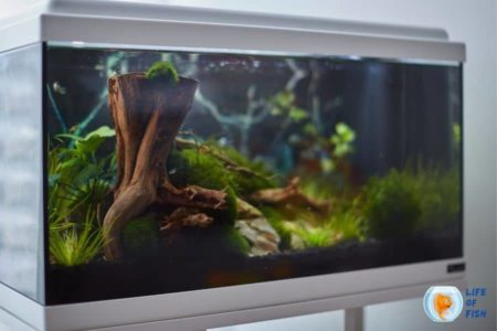 Top 8 Best All In One Aquarium Kits For New Fish Keepers | Comparison