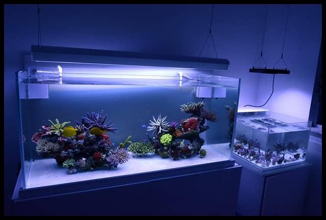 Bare Bottom Reef Tank look