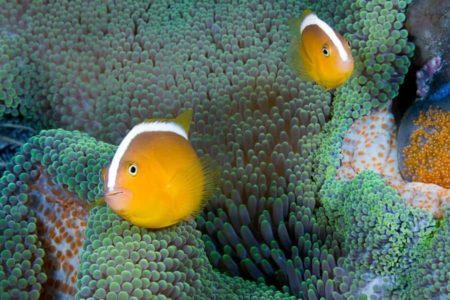 Can Clownfish Change Gender? Interesting Facts You Must Know