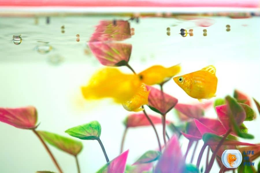 How do you stop fish from eating plants?