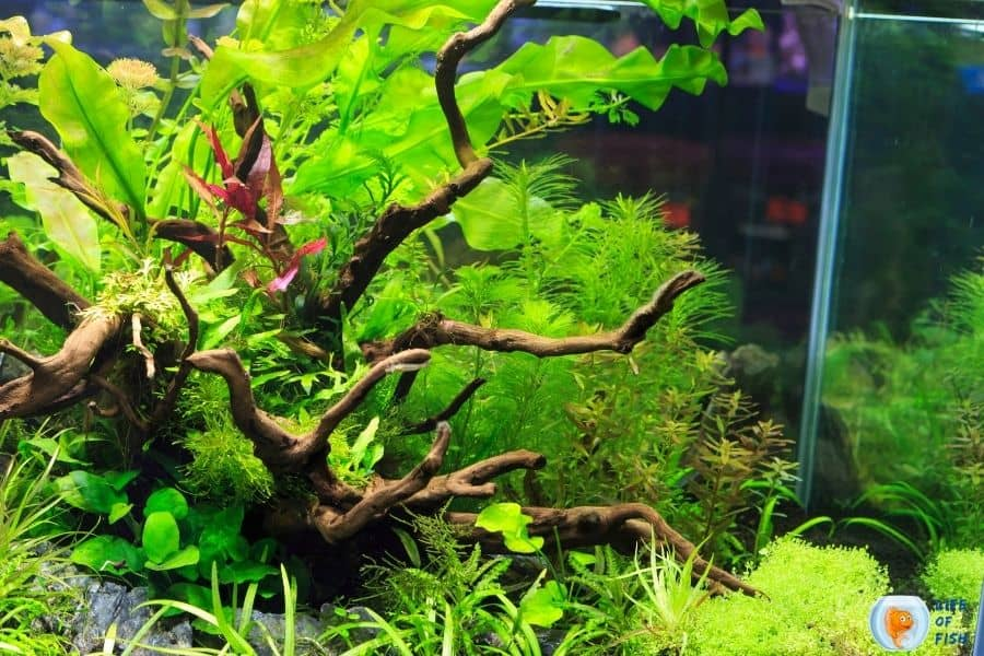 Tap Water For A Planted Tank