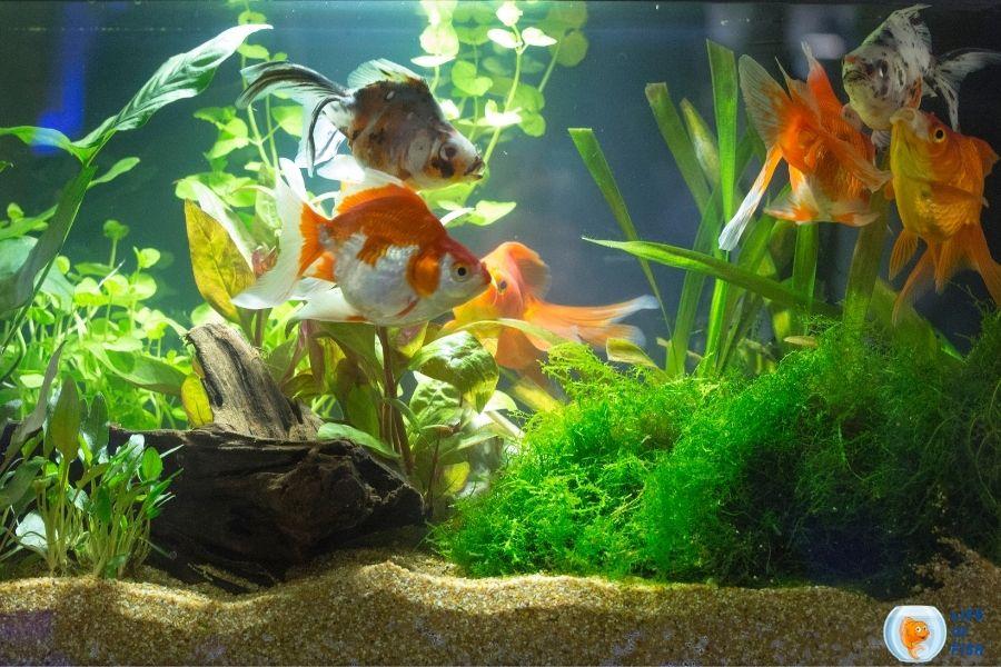 Aquarium Insurance