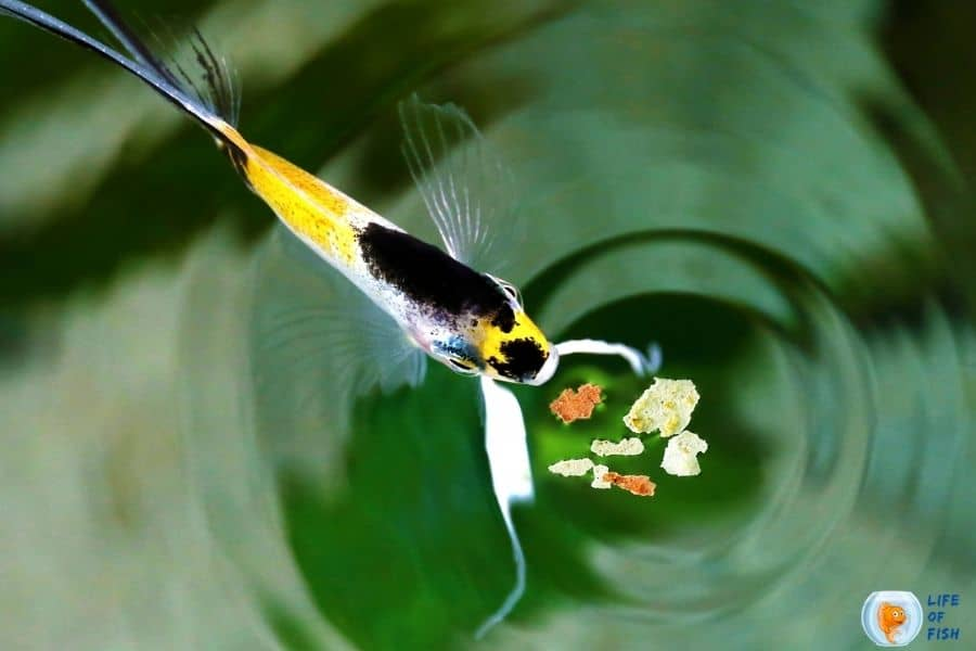 poured too much fish food