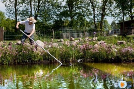 6 Super Important Pond Maintenance and Cleaning Facts (Year around)
