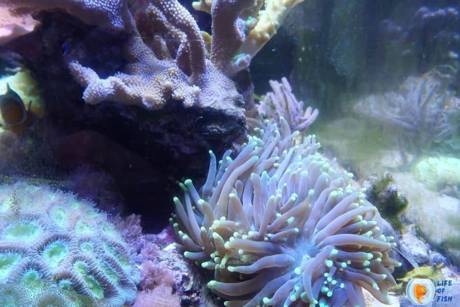 freshwater dip for coral